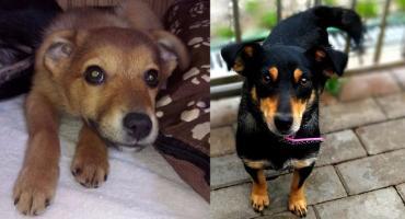 Pruszkowskie Stowarzyszenie na Rzecz Zwierząt - Munia i Figa do adopcji