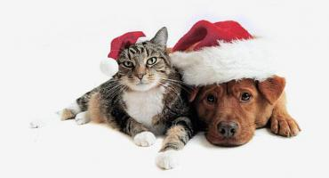 Gmina Miasto Pruszków zaprasza do skorzystania z bezpłatnego czipowania zwierząt