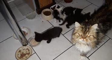 Dla miłośników kotów - zaadoptuj kociaka
