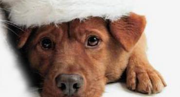Adopcja psiaczków - psnrz