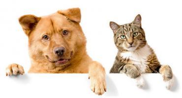 Adopcje psiaków - PSNRZ