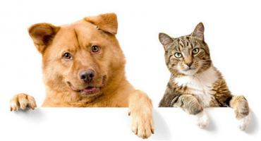Pruszkowskie Stowarzyszenie na Rzecz Zwierząt zaprasza do adopcji