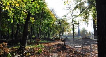 Prace rewitalizacyjne w brwinowskim parku