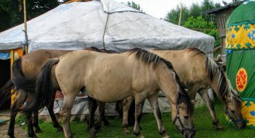 W Kruszynianach nie chcą kurzych ferm. Interweniuje też poseł Tyszkiewicz