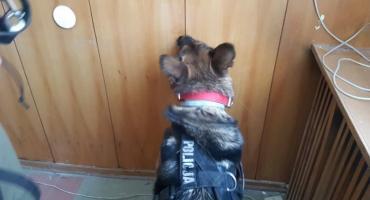 Policyjne psy szkoliły się w Bielsku Podlaskim