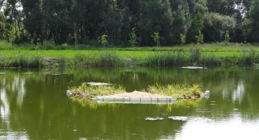 Platformy na wodzie oczyszczą wodę i będą przystanią dla ptaków