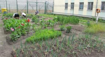 Osadzeni mają swoją oazę zieleni