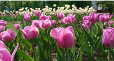Kwiatami, a w zasadzie zamiast nich, można spełnić marzenie