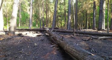 W Puszczy Białowieskiej w tym roku było już dziewięć pożarów