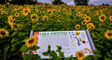 Aparaty w dłoń i do fotografowania łąk kwietnych