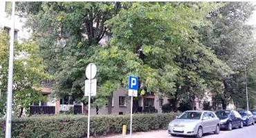 Drzewa na Parkowej na razie zostają