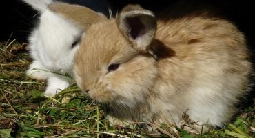 Zostaw wszystko i chodź oglądać króliki!