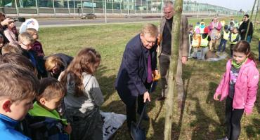 W Białymstoku przybyło 15 nowych platanów klonolistnych