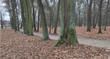 Park Lubomirskich straci 27 drzew, one będą wycięte. Inne przejdą cięcia pielęgnacyjne