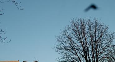 UFO nad Targówkiem?