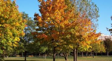 Jesień w Parku Bródnowskim