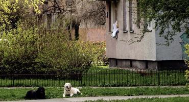 Adopcja psów – druga strona medalu