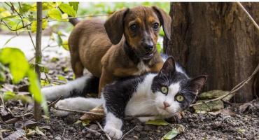 Program opieki nad zwierzętami – przyjęty