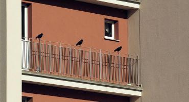 Ptaszki z Górnośląskiej
