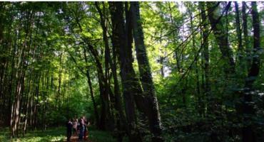 Bieg Błasika w Lesie Kabackim [ZAPISY]