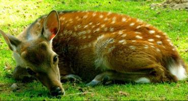 """Ośrodek Rehabilitacji Zwierząt """"Marysieńka"""", azyl dla chorych dzikich zwierząt."""