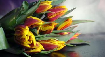 X Wystawa Tulipanów już w marcu w Oranżerii