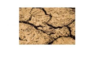 Od 14 do 28 września 2018 r. w biurach powiatowych ARiMR będzie można składać wnioski o pomoc po sus
