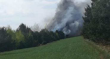 Pożar lasu w Kuranowie