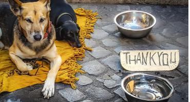 Pomóżmy bezdomnym zwierzętom przetrwać upał