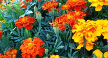 41 Skierniewickie Święto Kwiatów, Owoców i Warzyw
