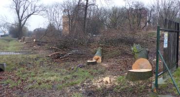 Trwa wycinka drzew pod budowę nowej ulicy w Łowiczu