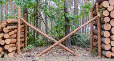 Wycinka w lasach prywatnych: uwaga, ważna informacja dla właścicieli