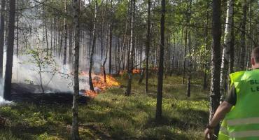 Pożar lasu: straty przyrodnicze są nie do oszacowania