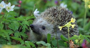 Stwórz ogród przyjazny zwierzętom: bezpłatne warsztaty