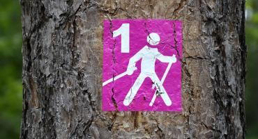Rajd Nordic Walking z przewodnikiem