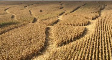 Labirynt w kukurydzy – świetna atrakcja dla turystów w kampinoskich Prusach