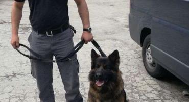Górowscy policjanci w walce z przestępczością narkotykową - 4 osoby zatrzymane
