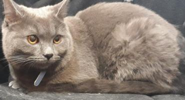 Kot porzucony na wrocławskim dworcu PKS zamieszka w gabinecie prezydenta