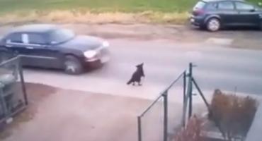 Śmiertelnie potrącił psa i uciekł