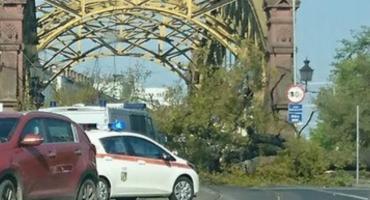 Drzewo runęło na Most Zwierzyniecki