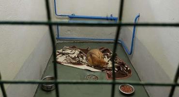 Azyl dla zwierząt pęka w szwach
