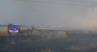 W Zabrodziu spłonęły 4 ha zboża na pniu