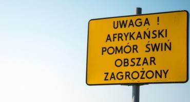 Afrykański Pomór Świń dociera na Dolny Śląsk ?