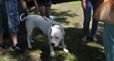 Sześć miesięcy więzienia za znęcanie się nad psem