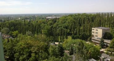 250 drzew zniknie z Kostrzyńskiej w wyniku planowanej przebudowy ulicy