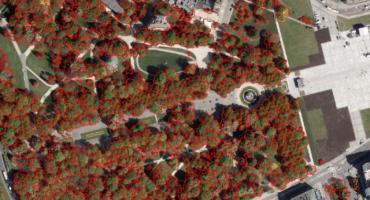 Powstaje Mapa Koron Drzew