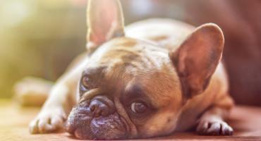 Będzie nowelizacja ustawy o ochronie zwierząt. Znikają trzy zakazy