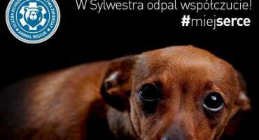 Ruszył Sylwestrowy Patrol Animal Rescue Polska