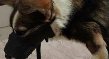Pies obdarty ze skóry - dramat w Pionkach. Uwaga! Drastyczne zdjęcia!