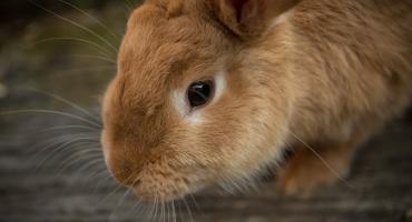 Ktoś porzucił królika na klatce schodowej...